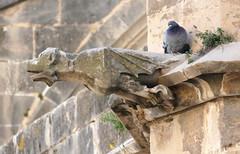 Gargoyles, Tortosa cathedral (Marlis1) Tags: gargoyles gargouille gargolas wasserspeier marlis1 tortosacataluñaespaña panasonicfz1000 cathedraltortosa