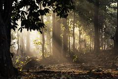 Maikal hills - Chhattisgarh - India (wietsej) Tags: wood india zeiss sunrise landscape sony hills 135 18 a100 chhattisgarh sal135f18z maikal