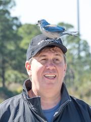 IMG_3502 (Bill Jelen) Tags: birding scrubjay rockledge