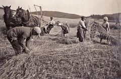 Getreideernte (matthias_oberlausitz) Tags: flickr ernte countrylife tbt historisch getreide