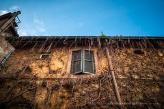 (Alessandro Argentieri) Tags: travel italy rome roma texture window colors wall facade outdoors italia trastevere finestra buildingexterior