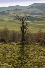 CILIEGIO / CHERRY TREE (MY SECRET WINDOW) Tags: autumn tree leaves foglie cherry landscapes woods campo chestnut fiore albero autunno paesaggio appennino bosco pianta castagne ciliegio maroni allaperto fioritura castagni distesa erbosa