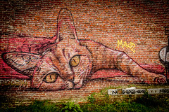 20160131-naamloos-0018 (Phootomania) Tags: urban cat graffiti 1 kat graffity website urbex doel