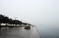 DSC_2202 (angie_amore7) Tags: trees sea rain fog slovenia promenade february koper
