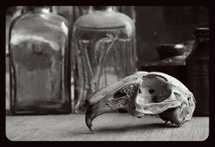 05/52 (Wiccy.) Tags: rabbit nature found skull suffolk gift present