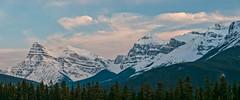 Saskatchewan Crossing panorama ( L to R - Mt. Chephren, White Pyramid, Epaulette Mountain, Banff National Park, Allberta (Cwep) Tags: panorama canada location alberta banffnationalpark aspect 2011