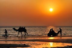 Beachcomber! (_Amritash_) Tags: travel sunset sea sun seascape beach silhouette seaside silhouettes camel camels gujarat sunsetsky sunsetpoint mandvi arabiansea beachscape travelindia sunsetcolors sunsetlights gujarattourism