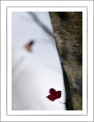 F_DSC2086-1-Nikon D300S-Nikkor 28-300mm-May Lee  (May-margy) Tags: red blur leaves bokeh taiwan acer  multiexposure  wulingfarm       taichungcity   repofchina itlookslikeaface nikond300s maymargy nikkor28300mm maylee  mylensandmyimagination  naturalcoincidencethrumylens  linesformandlightandshadows fdsc20861