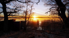 Awakening (Jens Haggren) Tags: trees sea sky sun seascape water sunrise sweden olympus omd em1 nacka