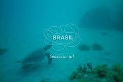 NE_Abrolhos0047 (Visit Brasil) Tags: horizontal brasil fauna natureza bahia nordeste detalhe externa abrolhos semgente subaqutica diurna