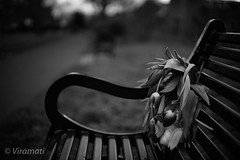Memorial (Viramati) Tags: flowers bench remembrance