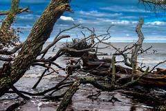 Big Talbot Island, Florida (Andy Montgomery) Tags: ocean seascape beach island seaside big florida atlantic driftwood talbot