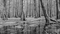 In My Wintry World (JDS Fine Art & Fashion Photography) Tags: trees winter bw lake inspiration water monochrome beauty landscape florida land inspirational naturalbeauty canondslr soe anseladams tistheseason sigma1835mm beautifulearth landscapebeauty elitephotography magnificantbeauty