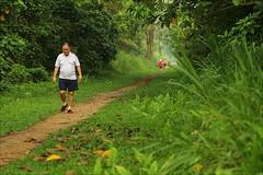 Greenwalk (yadhavan.c) Tags: people tree green nature singapore exercise path walk naturereserve hikers bukittimah morningwalk naturescene gogreen outdoot canon60d ckphotography yadhavancphotography