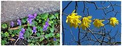 Great and happy Spring's days to you!- Vidám és kellemes tavaszi napokat Neked! (Katalin Réz) Tags: flower spring fleursetpaysages lovelymotherearth