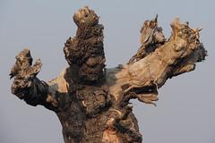 Scary Tree Man near Mums (Jim B's Pastels and Photos) Tags: man tree