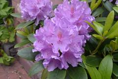 School Garden flower FRA 5-20-15