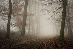 """forest path"" (Karel Hrouzek P H O T O) Tags: road autumn trees winter wild tree fall nature grass fog forest landscape 50mm haze woods frost czech path foggy brno freeze nikkor f18 leafs landschaft moravia"