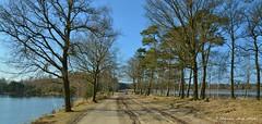 Koelevaartsveen - Dwingelderveld (henkmulder887) Tags: trees panorama holland tree nature water landscape nikon natuur natura sbb boom ven drenthe landschap natuurmonumenten staatsbosbeheer dwingelderveld natuir koelevaartsveen vernatting
