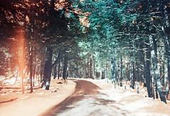 Vintage Roads II (thomas_anthony__) Tags: road travel blue trees winter light orange lake snow color tree film pine analog forest 35mm canon vintage lomo lomography path turquoise vibrant grain dream surreal roadtrip lightleak lightleaks pines memory gradient dreamy paths a1 analogue leak canona1 daydream sapphire daydreams deepcreeklake offcolor lightleaked dreamforest lomochrome lomochrometurquoise