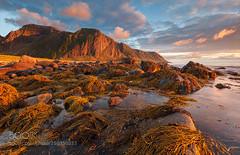 Nordic Light (HoustonHVAC170) Tags: ocean light sunset wild summer orange sun mountain berg norway clouds landscape evening abend coast europa sonnenuntergang tide natur wolken steine gelb sonne lofoten tang einsam atlantik gipfel polarkreis unberhrt nordpolarmeer