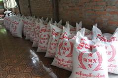 Rice plant at Bilugyun, Mawlamyine (Michael Chow (HK)) Tags: myanmar bilugyun mawlamyine