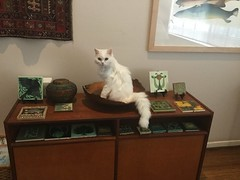Pearl found a new bowl! (Philosopher Queen) Tags: cat chat kitty bowl gato pearl whitecat newbowl catinabowl