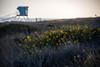 Flowers And Lifeguard Tower (jimsheaffer) Tags: california flowers sunset spring lifeguard lifeguardtower leocarrillo leocarrillostatebeach nikond750 leocarrillocampground