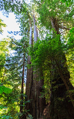 Muir Woods (gregoryl.johnson56) Tags: sanfrancisco california nava