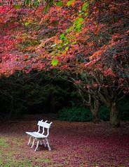 Bench2 (newbs216) Tags: autumn trees landscape mtwilson