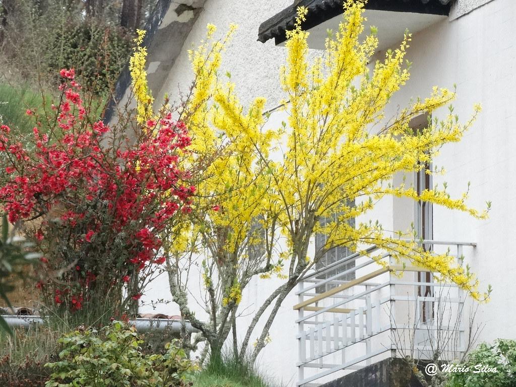 Águas Frias (Chaves) - ... entre o vermelho e o amarelo ...