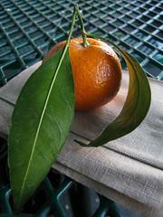 The Perfect Satsuma (prima seadiva) Tags: california light shadow stilllife food orange texture fruit market bokeh petaluma satsuma naturemorte g9