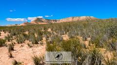 La Pedriza (Acrocephalus Photography) Tags: landscape outdoors spring spain bush sand hill zaragoza plain scrub esp naturalworld naturephotography belchite aragn drylands scrubland elplanern