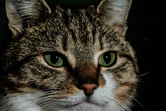 I was sleeping...... (NikNak Allen) Tags: portrait pet face animal cat fur nose eyes close ears catportrait
