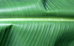 green pattern (kexi) Tags: wallpaper macro green texture canon turkey leaf pattern may palm minimalism simple 2015 instantfave