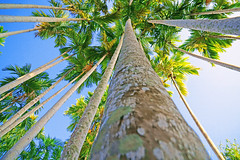 DSC00197 (Mr.CPH) Tags: blue trees summer sky thailand sony palm krabi a6000