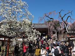 Spring opulence (M_Strasser) Tags: japan olympus nara olympusomdem1