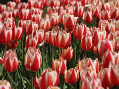 mozirski-gaj_47 (carlo) Tags: flowers olympus slovenia slovenija fiore botanicalgarden omd em1 ortobotanico giardinobotanico mozirje mozirskigaj