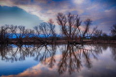 symmetry and fractals, mathematics everywhere in nature.. (vaibhavsarma) Tags: blue trees winter sunset sky abstract color detail tree fall nature water silhouette contrast forest reflections landscape outside countryside cool nikon focus colorful branch purple dusk framed branches national d90