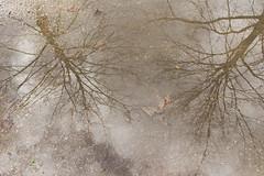 Je cherche ton souvenir Dans une infinie mlancolie... Sheila (Chris HF) Tags: reflet flaque arbre eau ciel water reflections reflection sky cloud mlancolie gloom melancholia tree