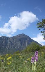 photo 4 (luka116) Tags: fleur suisse branson avril valais 2016 anacamptis anacamptismorio orchidaces follateres lesfollateres