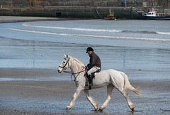 Stepping out! (swordscookie) Tags: sea horse dublin man beach wall strand boats pier waves exercise pace harness rider bridle stride fingal loughshinny
