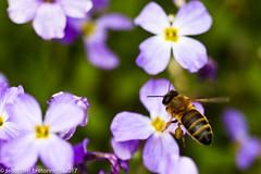Back to the macro - France - 2017 (Sebastien Bretonneau) Tags: flower color macro art nature colors animal insect photography flickr photographie couleurs couleur