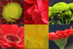 Extension tube mosaic (alanhitchcock49) Tags: red flower home yellow table mosaic tubes january textures extension 13 2015