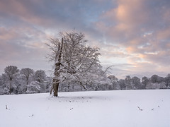 Cold and Broken (Damian_Ward) Tags: wood morning trees snow sunrise woodland photography nt chilterns nationaltrust hertfordshire ashridge herts thechilterns chilternhills ashridgeestate damianward ©damianward