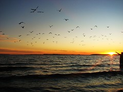Atardecer en el pacifico,Puerto Montt,Chile (Gabriel parra mdp) Tags: chile patagonia naturaleza sol landscape puerto atardecer mar paisaje lagos sur cielos region montt gaviotas pacifico oceano vuelo contrastes maravillas