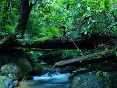 Stream at Rainforest of Borneo (nabeborneo68) Tags: longexposure waterfall rainforest stream tropical kuching