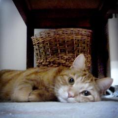 dejected (buckaroo kid) Tags: uk orange london cat ginger feline tabby woody woodythecat