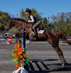 HITS 2016 2 (Photography & Website Design) Tags: horse competition hits jumpers ocala 2016