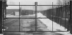 Gate (olsenkimmorten) Tags: snow fence gate lock barbwire barbed locked notodden